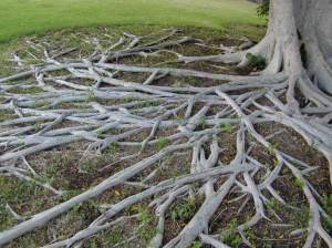 blog images - tree roots